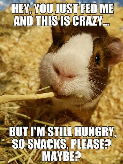 Crazy, Hungry, and Memes: HEY,  YOU  JUST  FED  ME  AND THIS IS CRAZY  BUTTM STILL HUNGRY  SO SNACKS, PLEASE?  MAYBE?