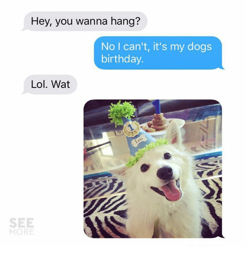 Birthday Dogs And Lol Hey You Wanna Hang No I Can