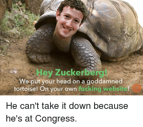 Dank, Fucking, and Head: Hey Zuckerbe  We put your head on a goddamned  tortoise! On your own fucking website!  tortoise! On your own fucking He can't take it down because he's at Congress.