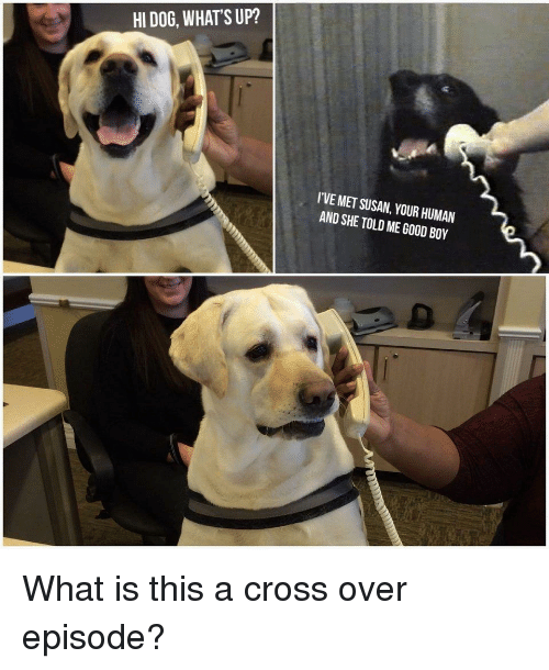 Cross, Good, and What Is: HI DOG, WHAT'S UP?  I'VE MET SUSAN, YOUR HUMAN  AND SHE TOLD ME GOOD BOY What is this a cross over episode?