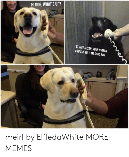 Dank, Memes, and Target: HI DOG, WHATS UP?  I'VE MET SUSAN, YOUR HUMAN  AND SHE TOLD ME GOOD BOY meirl by ElfledaWhite MORE MEMES