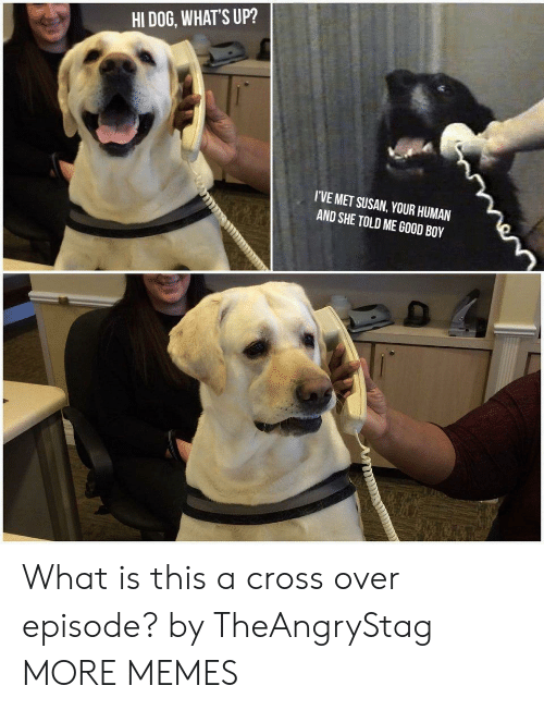 Dank, Memes, and Target: HI DOG, WHAT'S UP?  I'VE MET SUSAN, YOUR HUMAN  AND SHE TOLD ME GOOD BOY What is this a cross over episode? by TheAngryStag MORE MEMES