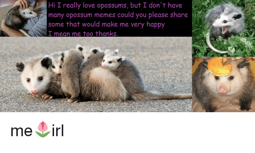 Hi I Really Love Opossums But I Dont Have Many Opossum Memes Could