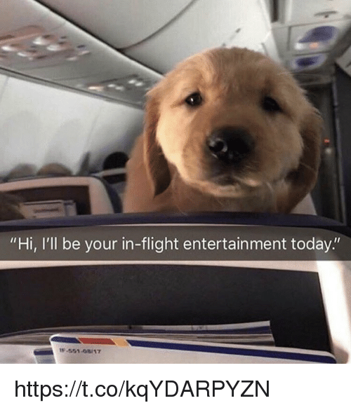 "Memes, Flight, and Today: ""Hi, I'll be your in-flight entertainment today.""  -551-08/17 https://t.co/kqYDARPYZN"