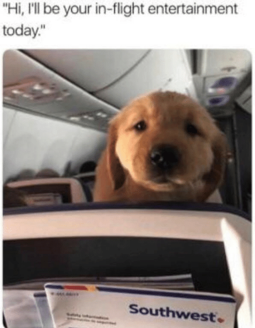"Flight, Southwest, and Today: ""Hi, I'll be your in-flight entertainment  today.""  Southwest"