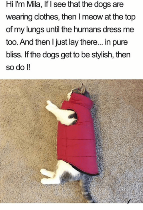 Clothes, Dogs, and Memes: Hi I'm Mila, If I see that the dogs are  wearing clothes,then I meow at the top  of my lungs until the humans dress me  too. And then I just lay there... in pure  bliss. If the dogs get to be stylish, then  so do I!