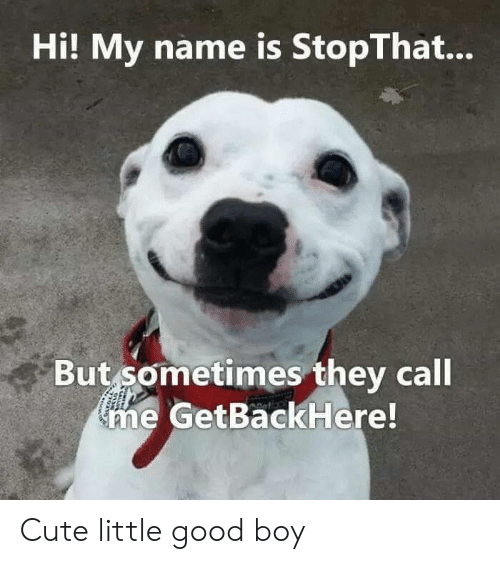 Cute, Good, and Boy: Hi! My name is StopThat...  But sometimes they call  me GetBackHere! Cute little good boy