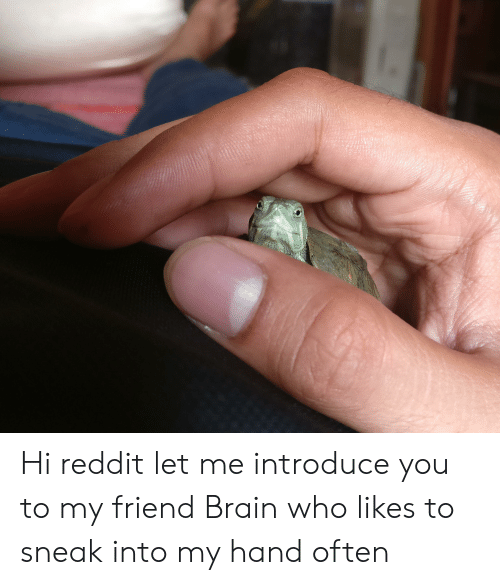 Hi Reddit Let Me Introduce You to My Friend Brain Who Likes to Sneak
