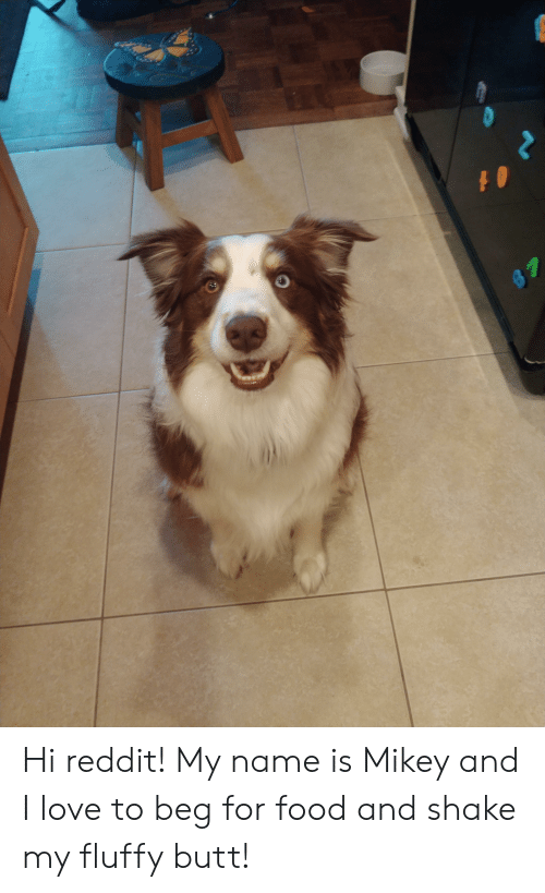Hi Reddit! My Name Is Mikey and I Love to Beg for Food and