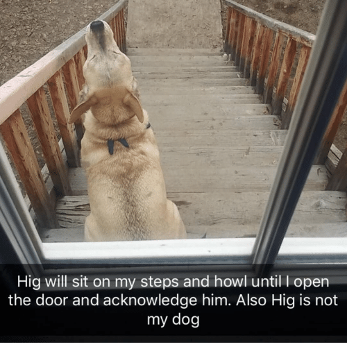 Dog, Him, and Open: Hig will sit on my steps and howl until I open  the door and acknowledge him. Also Hig is not  my dog