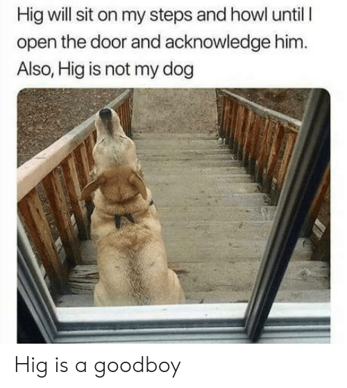 Dog, Him, and Open: Hig will sit on my steps and howl until l  open the door and acknowledge him.  Also, Hig is not my dog Hig is a goodboy
