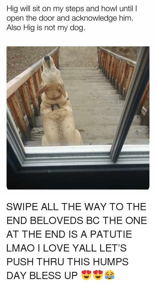 Bless Up, Lmao, and Love: Hig will sit on my steps and howl until  open the door and acknowledge him  Also Hig is not my dog SWIPE ALL THE WAY TO THE END BELOVEDS BC THE ONE AT THE END IS A PATUTIE LMAO I LOVE YALL LET'S PUSH THRU THIS HUMPS DAY BLESS UP 😍😍😂