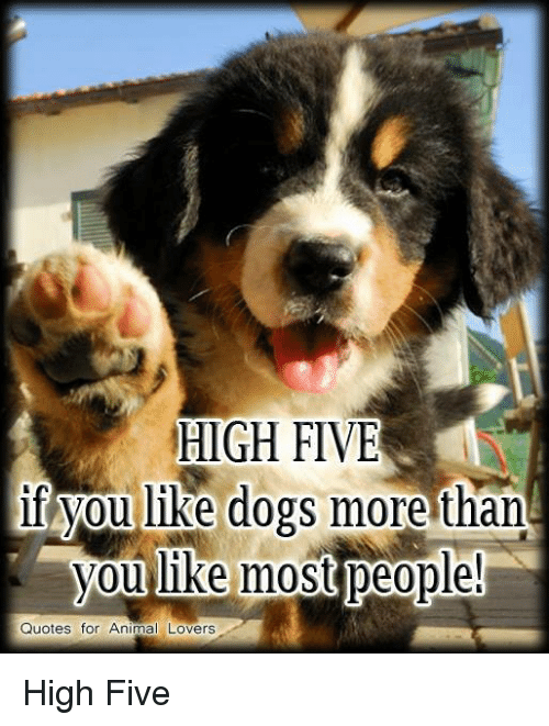 HIGH FIVE if You Like Dogs More Than You Like Most People ...