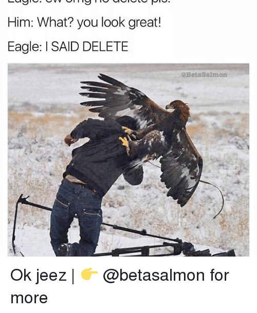 Memes, Eagle, and 🤖: Him: What? you look great!  Eagle: l SAID DELETE  @Beta8almon Ok jeez | 👉 @betasalmon for more