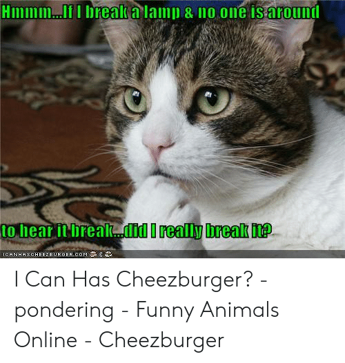 Animals, Funny, and Funny Animals: HImmm...II brealka lamp & no one is around  to hear it breakdid I really break it?  ICANHASOHEIZEURGER,COM I Can Has Cheezburger? - pondering - Funny Animals Online - Cheezburger