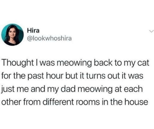 Dad, Dank, and House: Hira  @lookwhoshira  Thought I was meowing back to my cat  for the past hour but it turns out it was  just me and my dad meowing at each  other from different rooms in the house