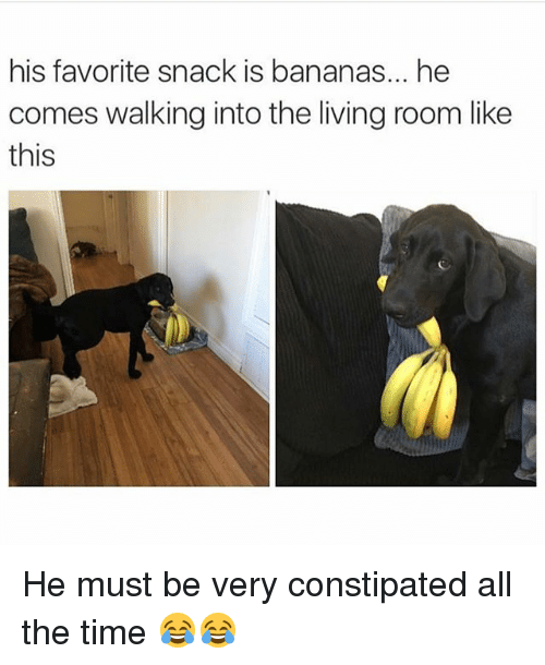 Funny, Time, and Living: his favorite snack is bananas... he  comes walking into the living room like  this He must be very constipated all the time 😂😂