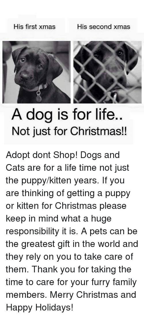 his first xmas his second xmas a dog is for life not just for