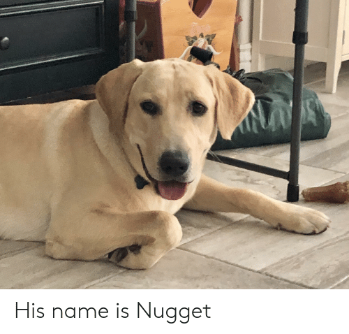 Name, Nugget, and His: His name is Nugget