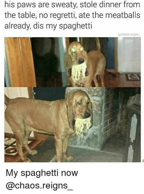 Spaghetti, Dank Memes, and Table: his paws are sweaty, stole dinner from  the table, no regretti, ate the meatballs  already, dis my spaghetti  @chaos.reigns My spaghetti now @chaos.reigns_