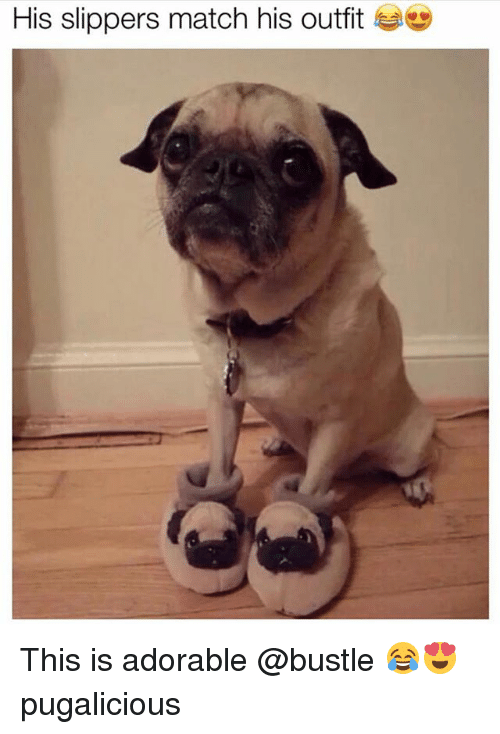 Funny, Match, and Adorable: His slippers match his outfit se This is adorable @bustle 😂😍 pugalicious
