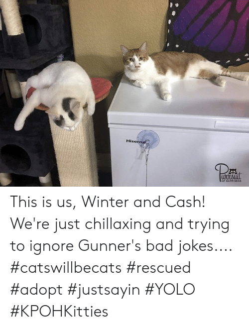 Bad, Bad Jokes, and Memes: Hisen  uutsuil  OF HAPPINESS This is us, Winter and Cash! We're just chillaxing and trying to ignore Gunner's bad jokes.... #catswillbecats #rescued #adopt #justsayin #YOLO #KPOHKitties