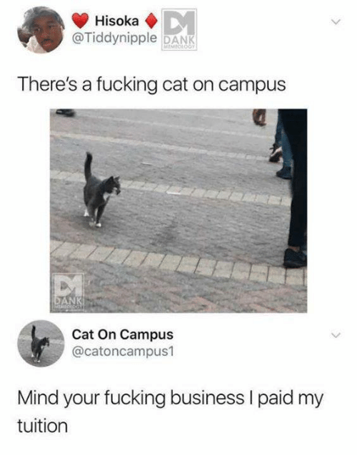 Dank, Fucking, and Memes: Hisoka  @Tiddynipple DANK  There's a fucking cat on campus  NK  Cat On Campus  @catoncampus1  Mind your fucking business I paid my  tuition