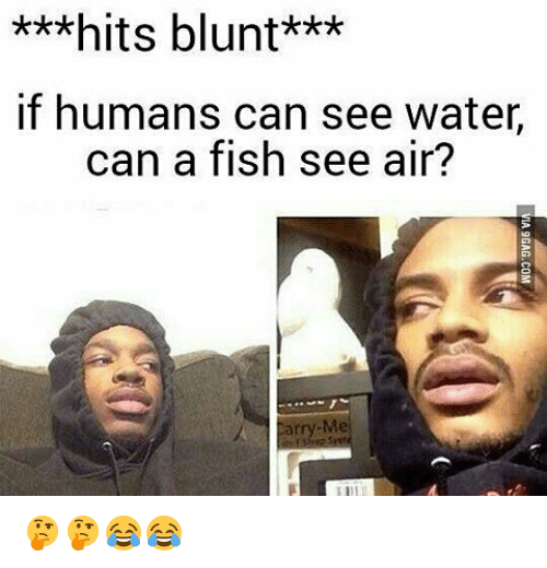 25 best memes about hits blunt hits blunt memes for Can fish see water