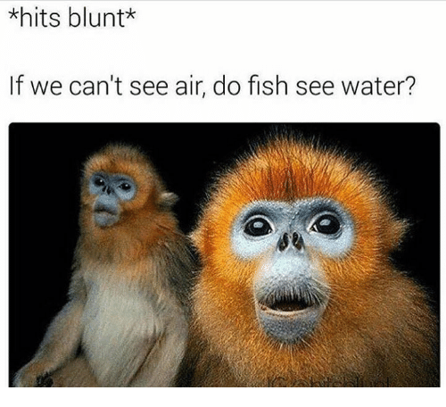 Blunts, Memes, and 🤖: *hits blunt*  If we can't see air, do fish see water?
