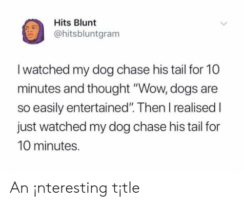 """Dogs, Wow, and Chase: Hits Blunt  ohitsbluntgram  I watched my dog chase his tail for 10  minutes and thought """"Wow, dogs are  so easily entertained"""". Then I realised I  just watched my dog chase his tail for  10 minutes. An ¡nteresting t¡tle"""