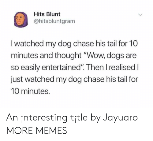 """Dank, Dogs, and Memes: Hits Blunt  ohitsbluntgram  I watched my dog chase his tail for 10  minutes and thought """"Wow, dogs are  so easily entertained"""". Then I realised I  just watched my dog chase his tail for  10 minutes. An ¡nteresting t¡tle by Jayuaro MORE MEMES"""