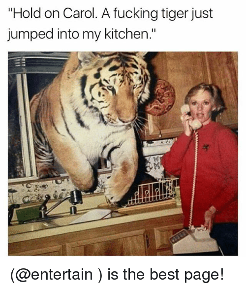"Fucking, Funny, and Meme: ""Hold on Carol. A fucking tiger just  jumped into my kitchen."" (@entertain ) is the best page!"