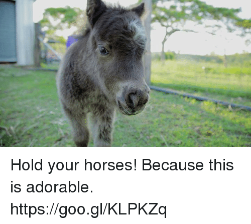Dank, Horses, and Horse: Hold your horses! Because this is adorable. https://goo.gl/KLPKZq