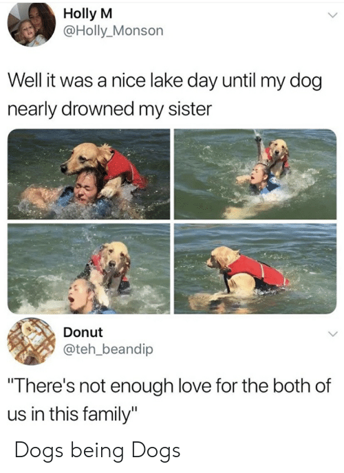 """Dogs, Family, and Funny: Holly M  @Holly_Monson  Well it was a nice lake day until my dog  nearly drowned my sister  Donut  @teh_beandip  """"There's not enough love for the both of  us in this family"""" Dogs being Dogs"""