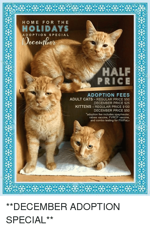 Home For The Holidays Adoption Special Ecelber Price Adoption Fees