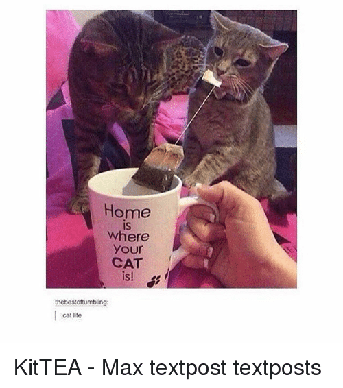 Life, Memes, and Home: Home  is  IS  where  your  CAT  IS  thebestoftumbling  cat life KitTEA - Max textpost textposts
