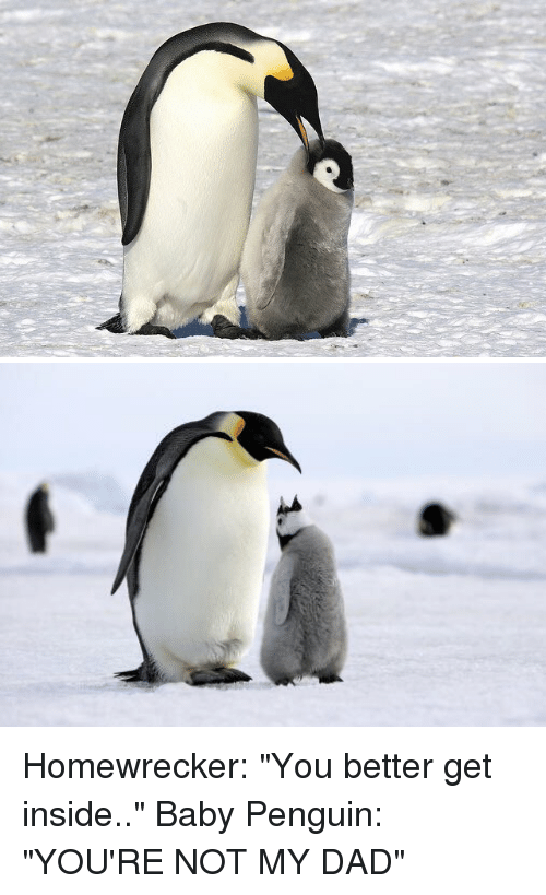 """Dad, Funny, and Penguin: Homewrecker: """"You better get inside.."""" Baby Penguin: """"YOU'RE NOT MY DAD"""""""