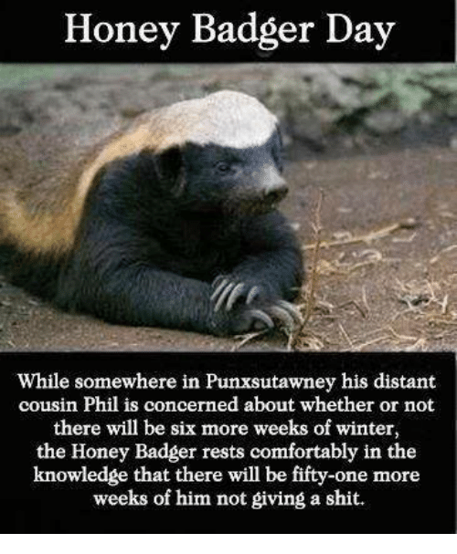 Comfortable, Memes, and Honey Badger: Honey Badger Day  While somewhere in Punxsutawney his distant  cousin Phil is concerned about whether or not  there will be six more weeks of winter,  the Honey Badger rests comfortably in the  knowledge that there will be fifty-one more  weeks of him not giving a shit.