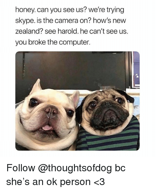 Memes, Camera, and Computer: honey. can you see us? we're trying  skype. is the camera on? how's new  zealand? see harold. he can't see us.  you broke the computer. Follow @thoughtsofdog bc she's an ok person <3