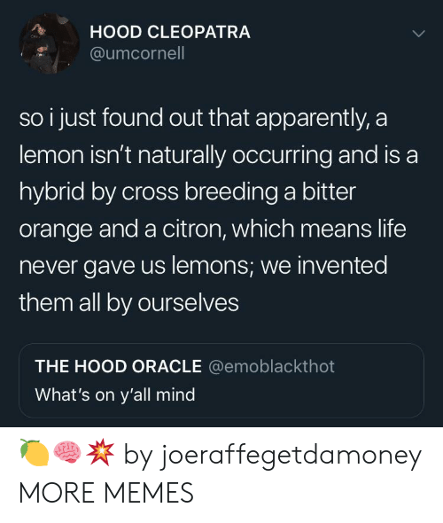 Apparently, Dank, and Life: HOOD CLEOPATRA  @umcornel  so i just found out that apparently, a  lemon isn't naturally occurring and is a  hybrid by cross breeding a bitter  orange and a citron, which means life  never gave us lemons; we invented  them all by ourselves  THE HOOD ORACLE @emoblackthot  What's on y'all mind 🍋🧠💥 by joeraffegetdamoney MORE MEMES
