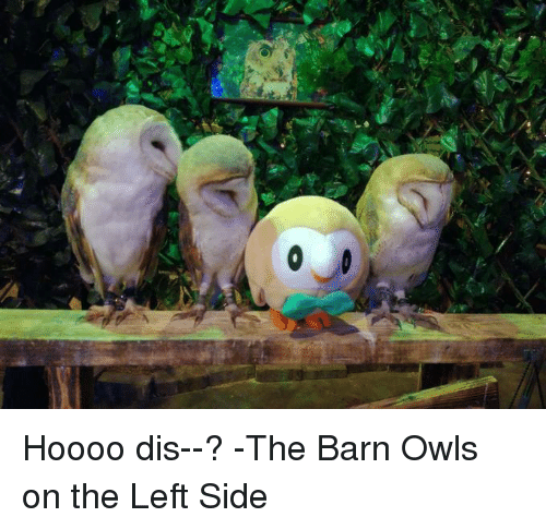 Dank, 🤖, and Owl: Hoooo dis--? -The Barn Owls on the Left Side