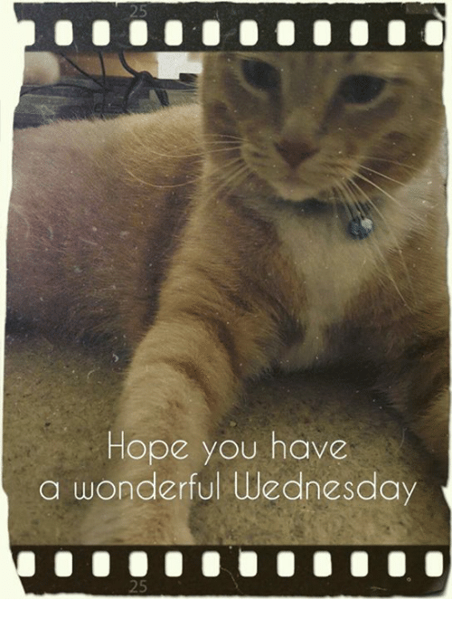 Memes, Wednesday, and Hope: Hope you have  a wonderful Wednesday
