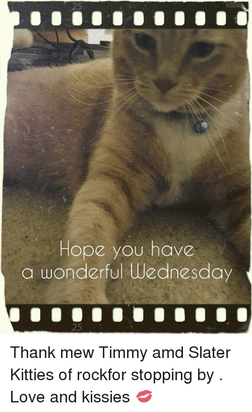 Kitties, Memes, and Wednesday: Hope you have  a wonderful Wednesday Thank mew Timmy amd Slater Kitties of rockfor stopping by . Love and kissies 💋
