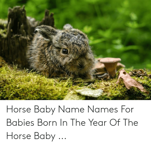 Horse Baby Name Names for Babies Born in the Year of the