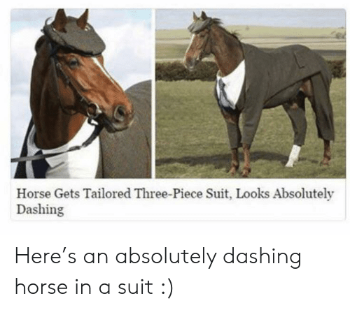 Horse, Three, and Piece: Horse Gets Tailored Three-Piece Suit, Looks Absolutely  Dashing Here's an absolutely dashing horse in a suit :)