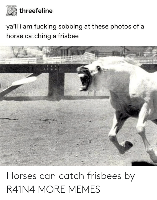 Dank, Horses, and Memes: Horses can catch frisbees by R41N4 MORE MEMES