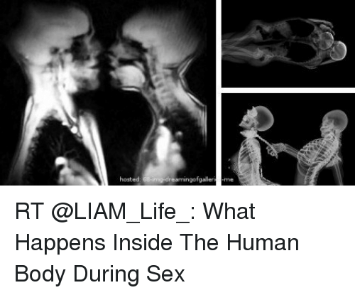 The human body during sex