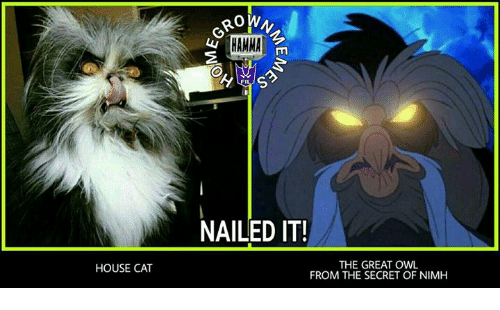 House Cat Rown Hamma Nailed It The Great Owl From The Secret Of