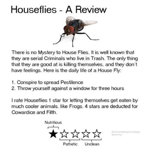Animals, Life, and Trash: Houseflies A Review  There is no Mystery to House Flies. It is well known that  they are serial Criminals who live in Trash. The only thing  that they are good at is killing themselves, and they don't  have feelings. Here is the daily life of a House Fly:  1. Conspire to spread Pestilence  2. Throw yourself against a window for three hours  I rate Houseflies 1 star for letting themselves get eaten by  much cooler animals, like Frogs. 4 stars are deducted for  Cowardice and Filth  Nutritious  welcometomymemepage  @wtmmp  Unclean  Pathetic