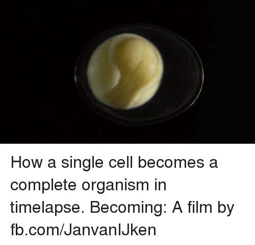Dank, fb.com, and Film: How a single cell becomes a complete organism in timelapse.  Becoming: A film by fb.com/JanvanIJken